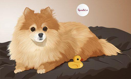 Retrato personalizado de perrito